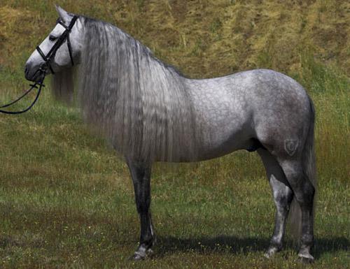 Dunbrody......the light king Dapple-grey-horse