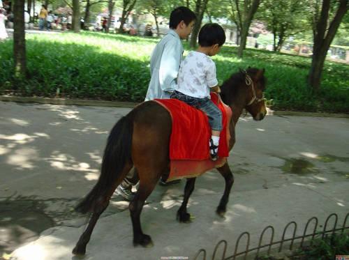 Debao Pony
