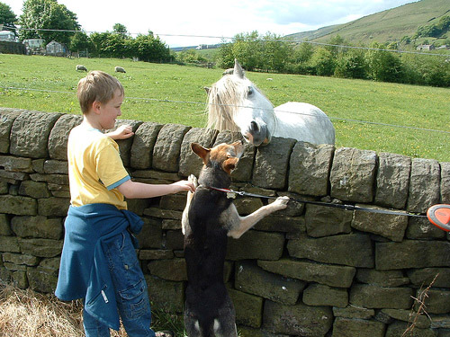 Horse and dog reaching over a fence to touch noses