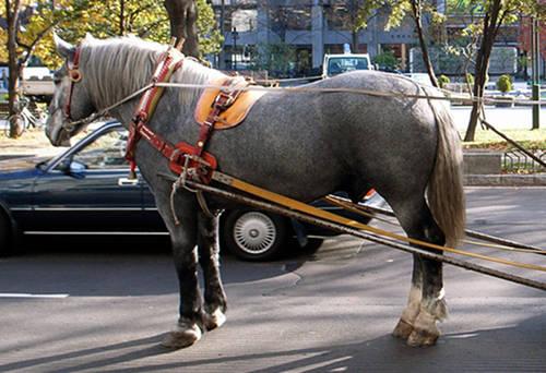 Dosanko Horse