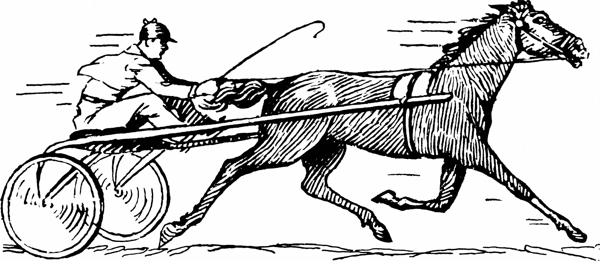 Kleurplaat Paard Springen Horse Line Drawings To Color The Equinest