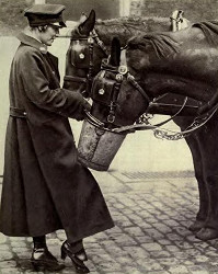 The Driver Horse And Carriages | Apps Directories