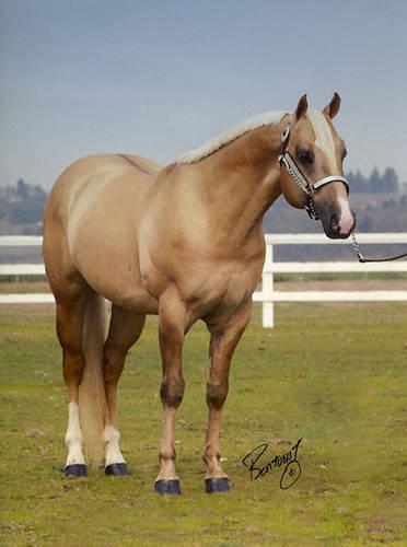 Dunalino Horse