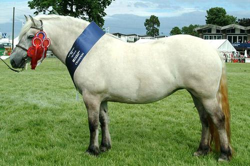 Dunskin Horse