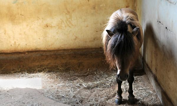 Emo Horse