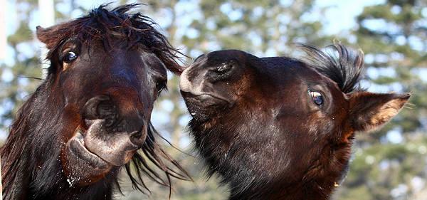 Horse Facial Expressions