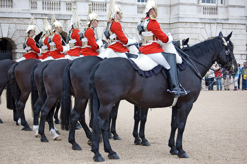 Horse Pictures From England | The Equinest  Horse Pictures ...