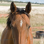 Horse Markings