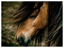 Close up of horse with wild mane