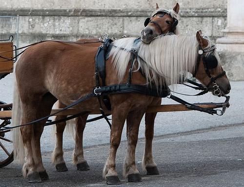 Flaxen Horse