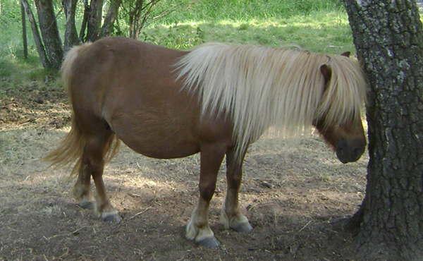 Medium Flaxen Horse
