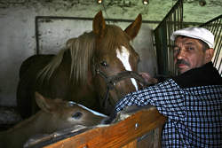 horse with stable foreman