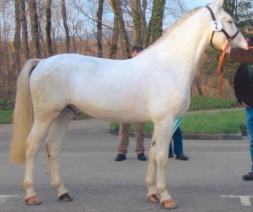 Freiberg Horse
