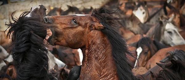 Furious Horse