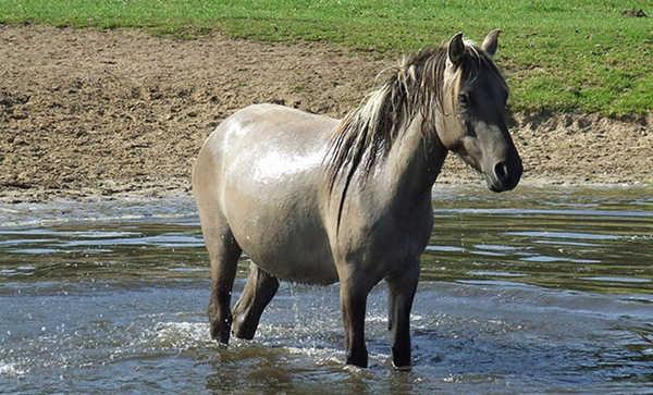 Horse in Georgie