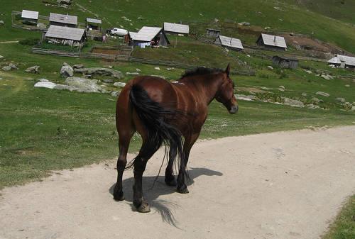 Glasinacki Horse