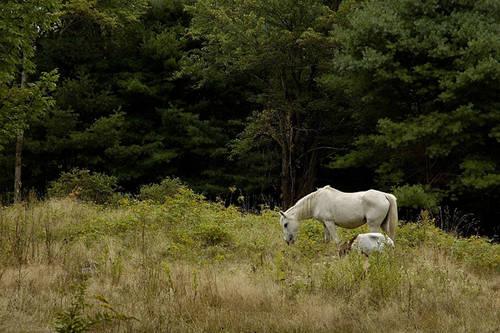 Goat & horse eating