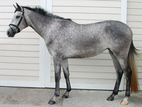 http://www.theequinest.com/images/grey-horse.jpg