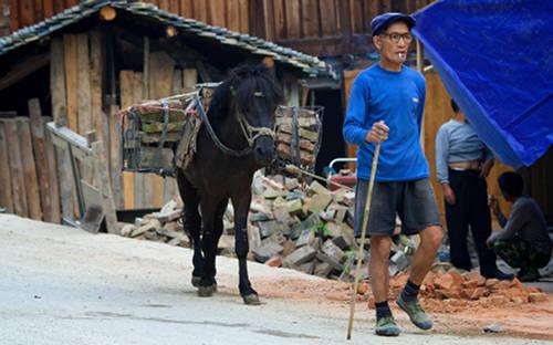 Guizhou Pony