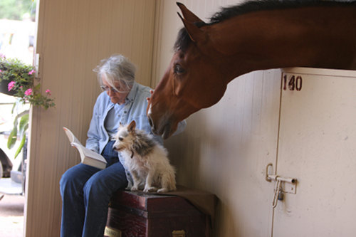 Horse reading book