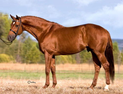 http://www.theequinest.com/images/hanoverian-21.jpg
