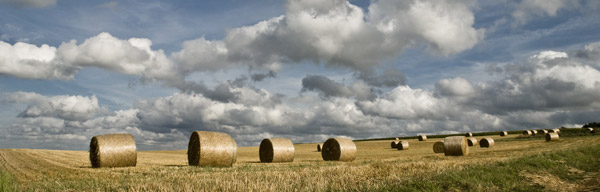 Hay Fields