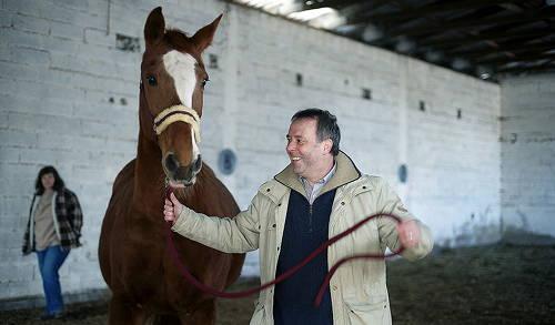 Hessen Horse