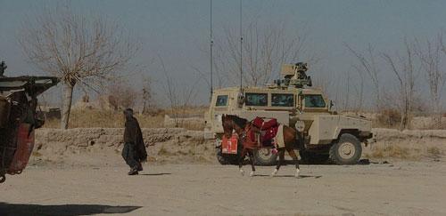 Horses in Afghanistan