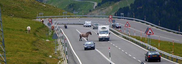 Horse in Andorra