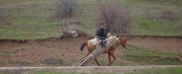 Horse in Armenia
