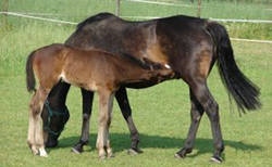 Horse with breeder