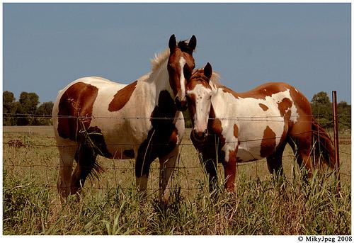 Horse Buddies