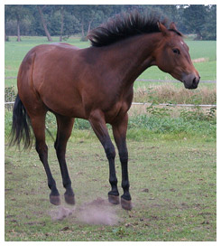 A horse jumping off the ground