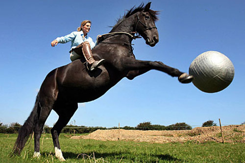 A horse rearing up to kick a ball