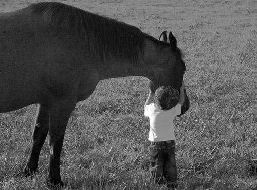 Child hugging horses head