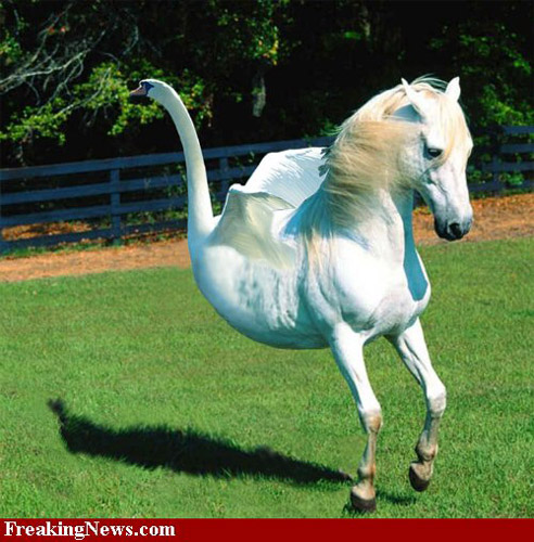 Photoshopped horse-swan