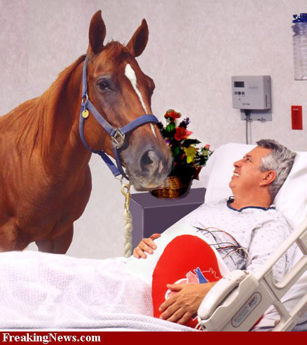 Photoshopped horse visiting the hospital