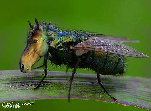 Photoshopped Horsefly