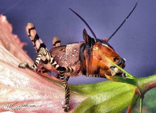 Photoshopped Horse insect