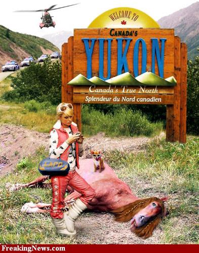 Photoshopped Paris Hilton and a dead pink horse