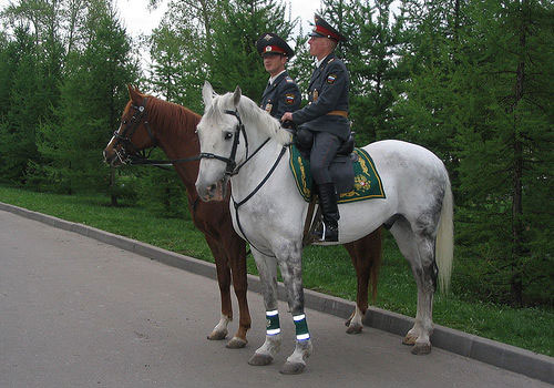 Horses in Russia