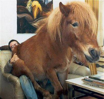 A horse sitting on a man's lap