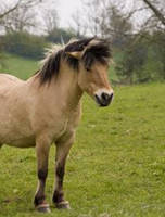 Horse Types