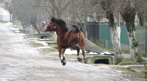 Horse image of the week