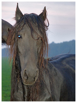 Horse with messed up mane