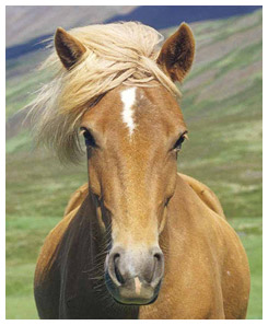 Horse forelock blowing in the breeze