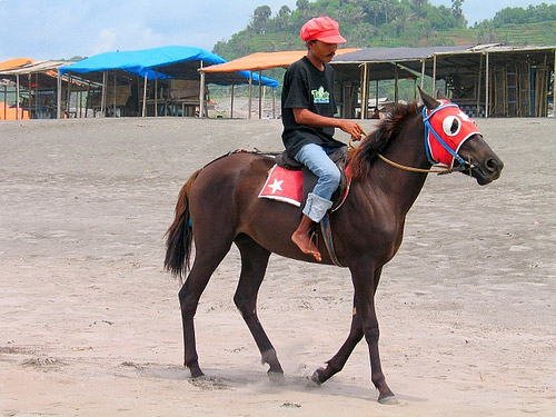 Horse in Indonesia