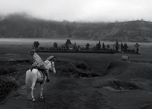 Java Pony