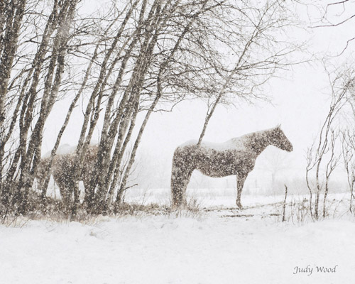 Snowy Solitude