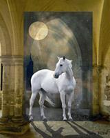 Starlight by Moonlight